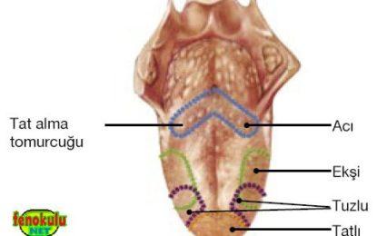 Buharcı Dili – Vaper's Tongue: Sebebi, Tedavisi